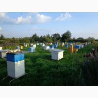 Продам мёд высокого качества (оптом или в розницу). Урожай 2020, разнотравье + вереск