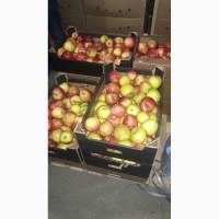 Продам яблоко, сорт Лигол