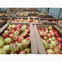 Куплю яблоко