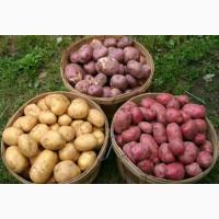 Купим картошку оптом с в украину или заберем сами Купим картошку оптом с доставкой в у