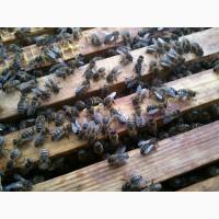 Продам пчелопакеты/отводки