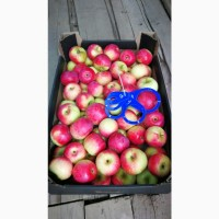 Оптовая Продажа яблок из Республики Беларусь сорта АУКСИС, АНТОНОВКА