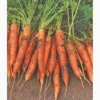 Семена овощных культур белорусской селекции