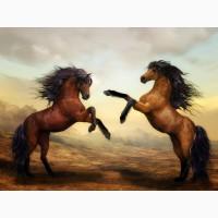 Куплю крупно рогатый скот и лошадей