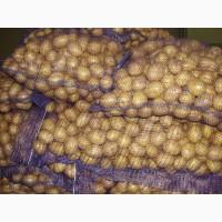 Продам продовольственный мытый картофель, сорт «Гала»