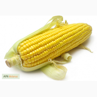 Продам сахарную кукурузу в початках