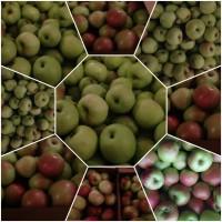 Яблоко свежее. Оптом