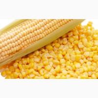 Кукуруза 14% РФ. ГОсТ