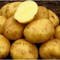Продам картофель, сорт Гала