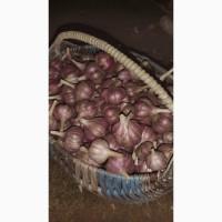 Продам зимний чеснок урожай 2021 года
