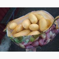 Продам картофель продовольственный, сорт Королева Анна