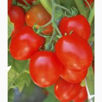 Куплю томат