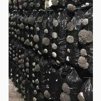 Реализует субстратных блоков грибов Вешенка
