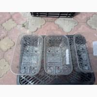 Продам тару упаковочную для клубники(пинетки, ящики)
