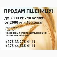 Пшеница! продам