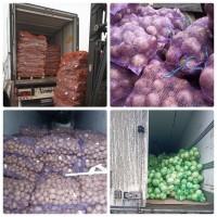 Закупаем на постоянной основе картофель и другие овощи оптом