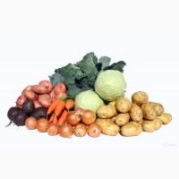 Закупаем картофель, лук, свеклу, морковь, капусту