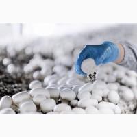 Продам шампиньоны свежие культивируемые охлажденные