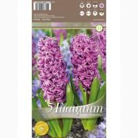 Гиацинт Purple Sensation 5 шт/уп р.15/16, каперс 108382