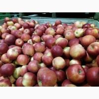 Продам яблока с Польши