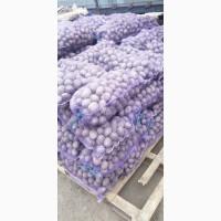Продам картофель Рэд Скарлет 20-32 кг