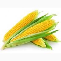 Продам кукурузу в пачатках суперсладкая