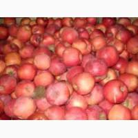 Яблоки оптом и в рознецу