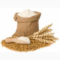 Мука пшеничная в/с м54-25 Полоцк оптом
