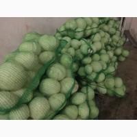 Продадим капусту белокочанную свежую, упакованную в сетку(оптом)