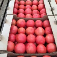 Ольшаны | Томаты розовые оптом под ключ