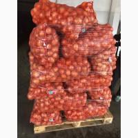 Продам лук репчатый Казахстан 5+ цена 0, 40руб. ОПТ