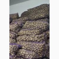 Продам отборный картофель, сорт Бриз