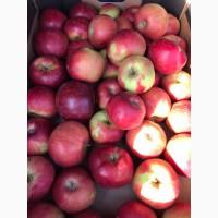 Яблоко свежее сортовое био