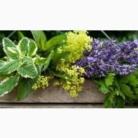Продам лекарственное растительное сырье