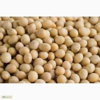 Производим закупку семян масличных культур : соя