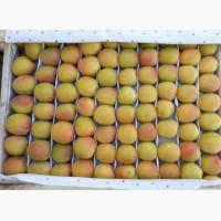 Продам абрикосы из Узбекистана Урожай 2018