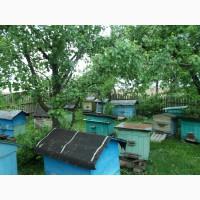 Продаются пчелиные семьи с личной пасеки