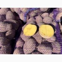 Картошка Украины Доставка из поля фермера Картофель