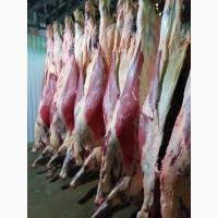 Купим говядину в полутушах четвертинах (мор), (охл)