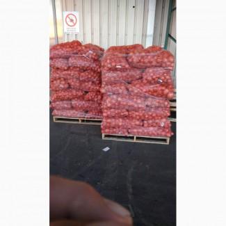 Продаю лук репчатый оптом