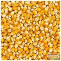 Продаем семена гибридов кукурузы урожая 2017 года, с двумя протравителями