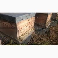 Продам пчелосемьи и пчелопакеты с матками Бакфаст F1 и Карника F1