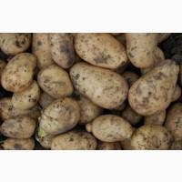 Куплю картофель 5