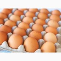 Качественные куриные яйца