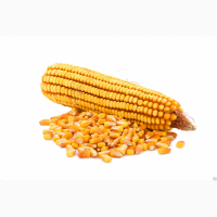 Семена кукурузы Каскад 195 СВ