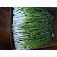 Продам зеленый лук перо, собственное производство, отличного качесства