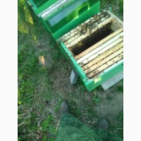 Пчелопокеты 6 дадана