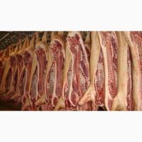 Реализуем мясо свинины оптом