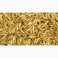 Продам овес тритикале пшеницу