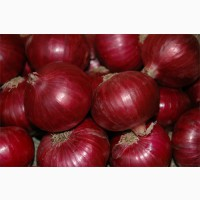 Selling Best Quality Exporter Of India Onion lt; +4536992142